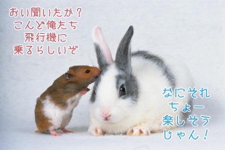 ハムスターとウサギの引っ越し相談